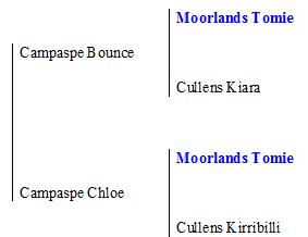 Campapse Ring pedigree