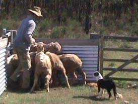 Campaspe Connie 4 mths