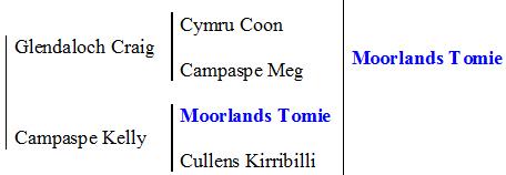 Monmore Gina pedigree