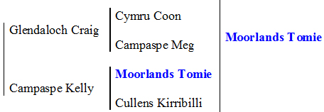 Monmore Mist pedigree