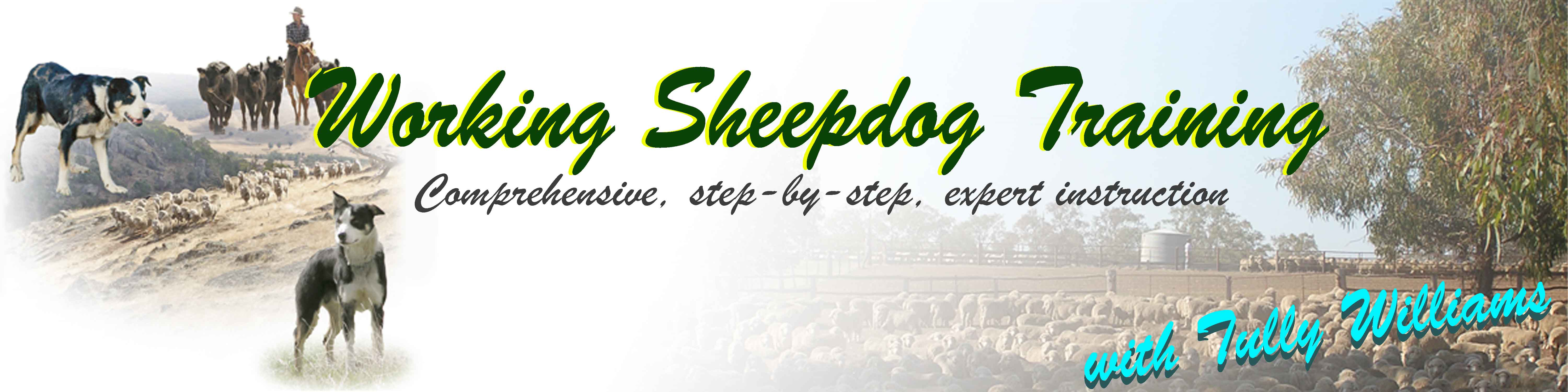 Working Sheepdog Training Videos header image